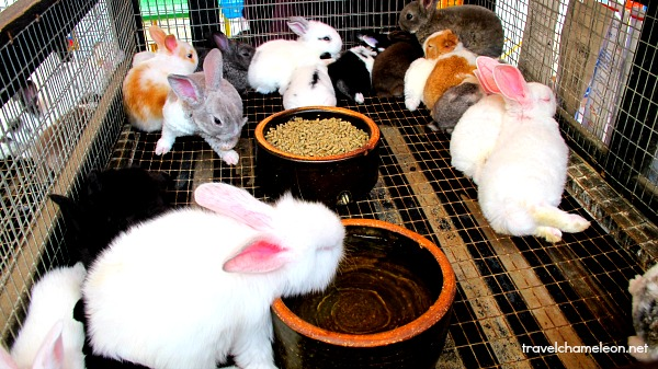 Cute rabbits for sale.