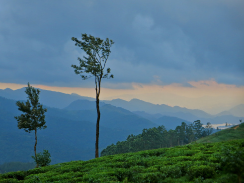 The hues of sunset at Madulkelle Tea Estate - photo by