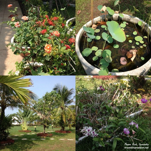 Roses, mangoes, lotus, orchids, ixora's can be found in the hotels' garden.